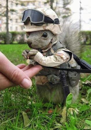 File:Army-squirrel.jpg