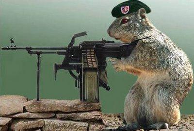 File:Military squirrel.jpg