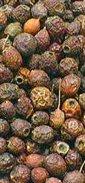 Hawwthorn Berries