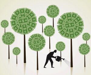 Money-tree-growing-startup