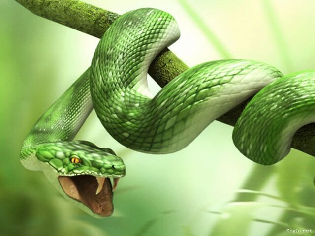 File:Wallpaper-serpent-3d-wallpaper.jpg