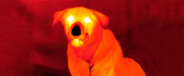 File:Creepy dog.jpg