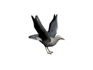 Seagull0000