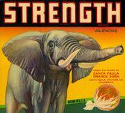 Strength-1024x923