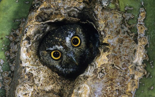 File:Birdsofprey8.jpg