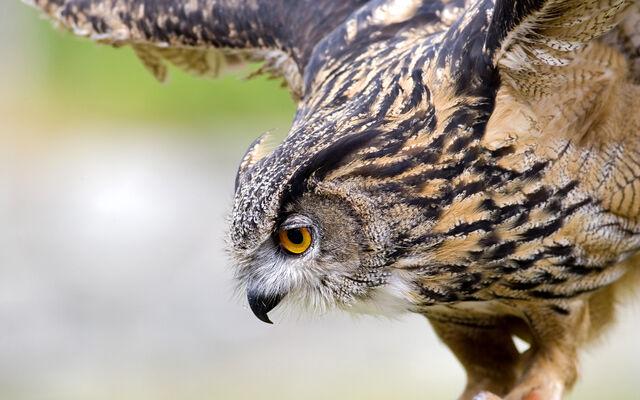 File:Birdsofprey7.jpg