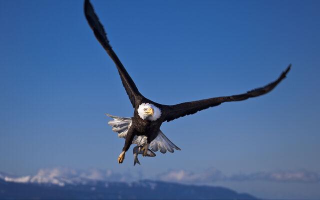 File:Birdsofprey1.jpg