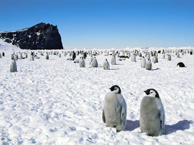 File:Emperor Antarctica Penguins.jpg