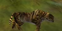 Tiger (Animal)