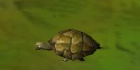 Turtle (Animal)