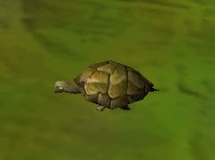File:Turtle.png
