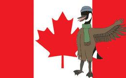 Canada Hachi