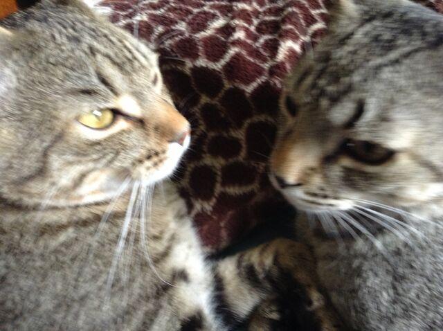 File:Cassie and Sofi.JPG