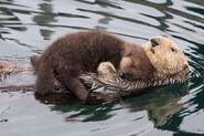 Ottercuddles