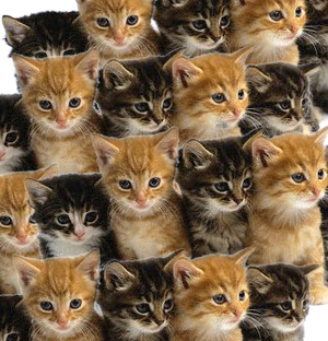 File:Cats!.jpg