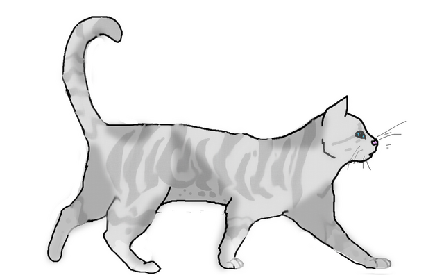 File:Silverpawswiftlineartfinish.png