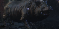 Maneater Boar