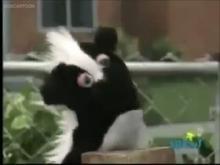 Skunk Puppe