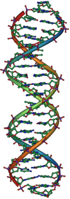140px-DNA Overview2
