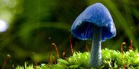 Book Team/Blue Mushroom