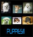 Thumbnail for version as of 03:01, May 5, 2012