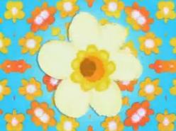Pretty flowers u knows