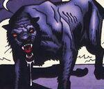 Dracula panther
