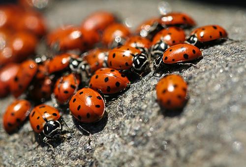 File:Ladybug Season.jpg