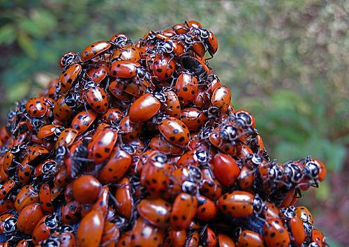 File:Love Bugs.jpg