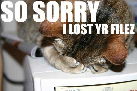 File:404cat.jpg