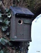 Ivy's Tree's Bird House