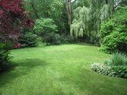 Ivy's Meadow
