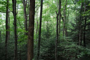 Interior Forest Conditions