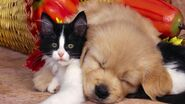 Cute-cats-dogs-pets-animals-1920x1080