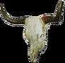 Cowskullleft