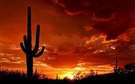 Desert-cactus-wallpaper