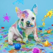 Coloring dog