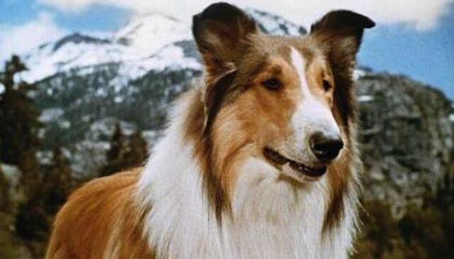 File:Lassie-cozi-thumb.jpeg