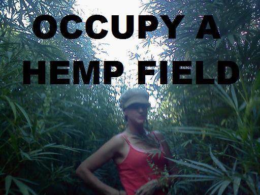 File:Occupy a hemp field.jpg