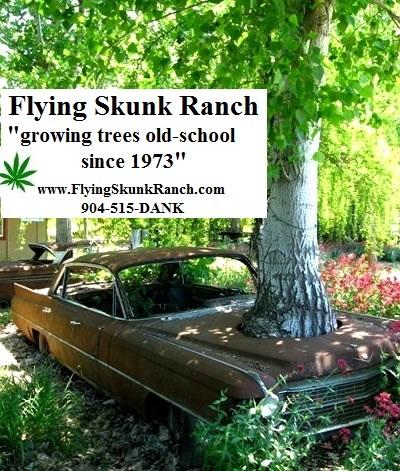 File:FlyingSkunkRanch.jpg