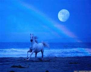 File:Thumbnailblueroanrunningundermoon rainbow.jpg