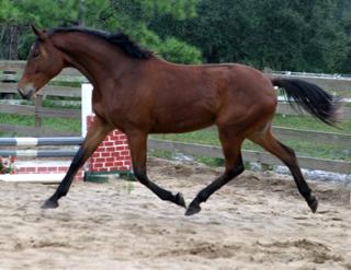 File:Emma's Horse.jpg