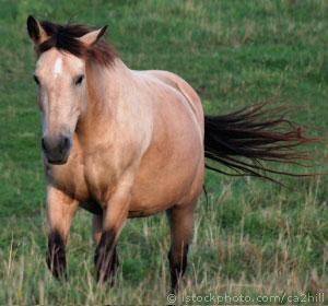 File:Horse dun.jpg