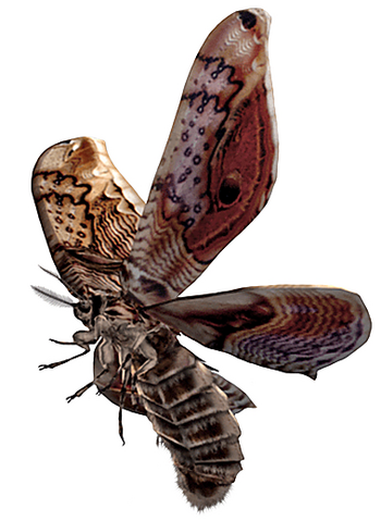 File:REOutbreakMoth.png