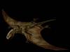 Carnivores Dimorphodon
