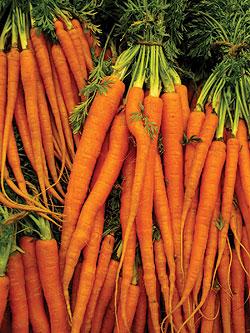 File:Carrotscarletnantes.jpg