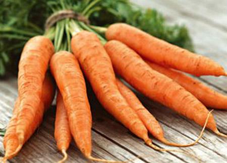 File:Carrot dan.jpg