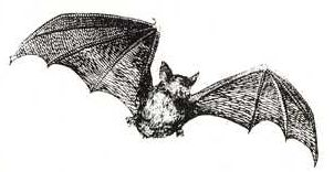 File:SOG Bat Familiar.JPG