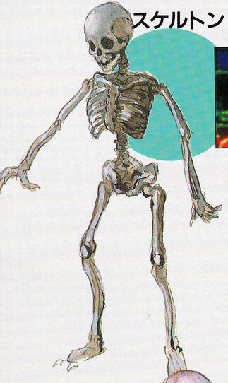 File:05skeleton.jpg