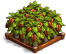 File:Cocoa 02.png